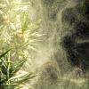 天候と花粉の関係と、それが及ぼす影響